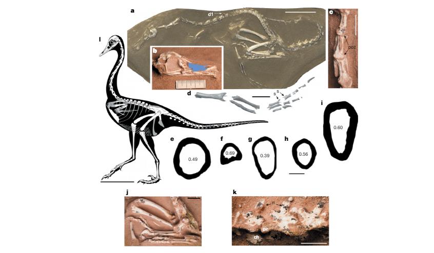 Descrição do fóssil analisado na pesquisa (Foto: Reprodução)
