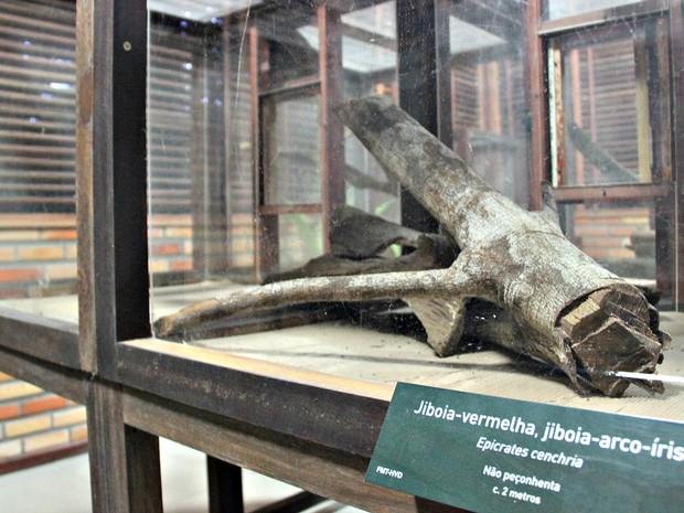 Jaula que abrigava animal  (Foto: Ísis Capistrano/ G1 AM)