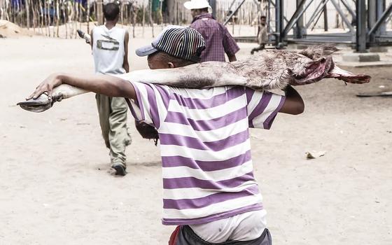 Jovem carrega parte de um animal caçado (Foto: James Suzman - divulgação)