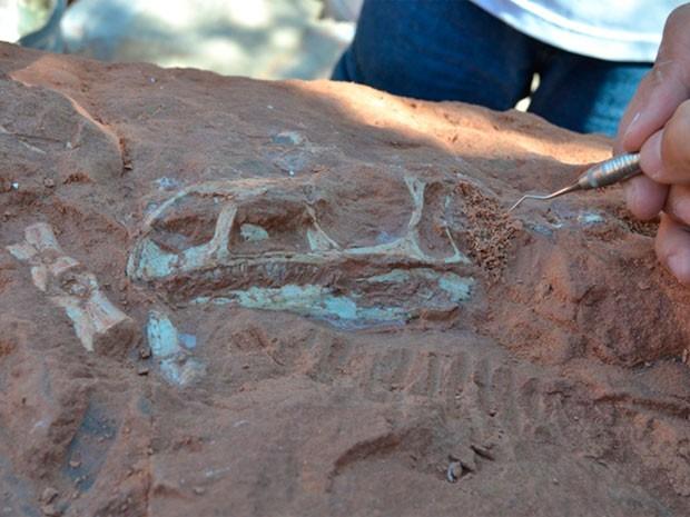 Pesquisadores descobrem três fósseis de dinossauros no RS (Foto: Divulgação/Unipampa)
