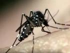 Veja locais no AM que atendem casos com sintomas de 'doenças do Aedes'