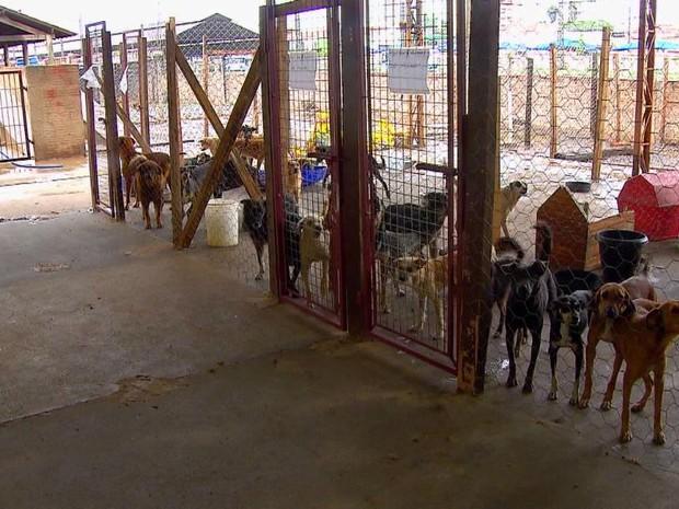 Superlotação de Canil em Rio Claro preocupa Associação de Defesa dos Animais (Foto: Ronaldo de Oliveira / EPTV)