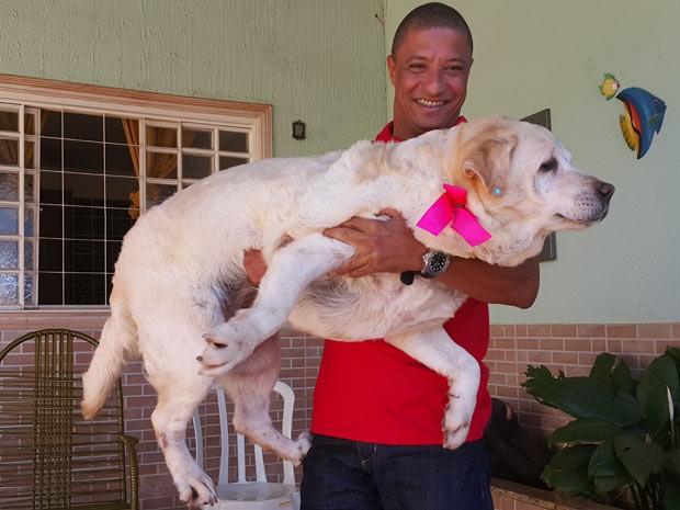 O empresário Marco Antônio dos Santos ergue a cadela Judi, que está obesa, no colo (Foto: Raquel Morais/G1)