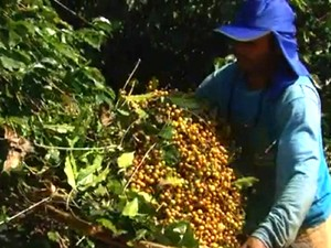 Trabalhador rural pode encontrar problemas no funcionalismo público  (Foto: Reprodução / EPTV)