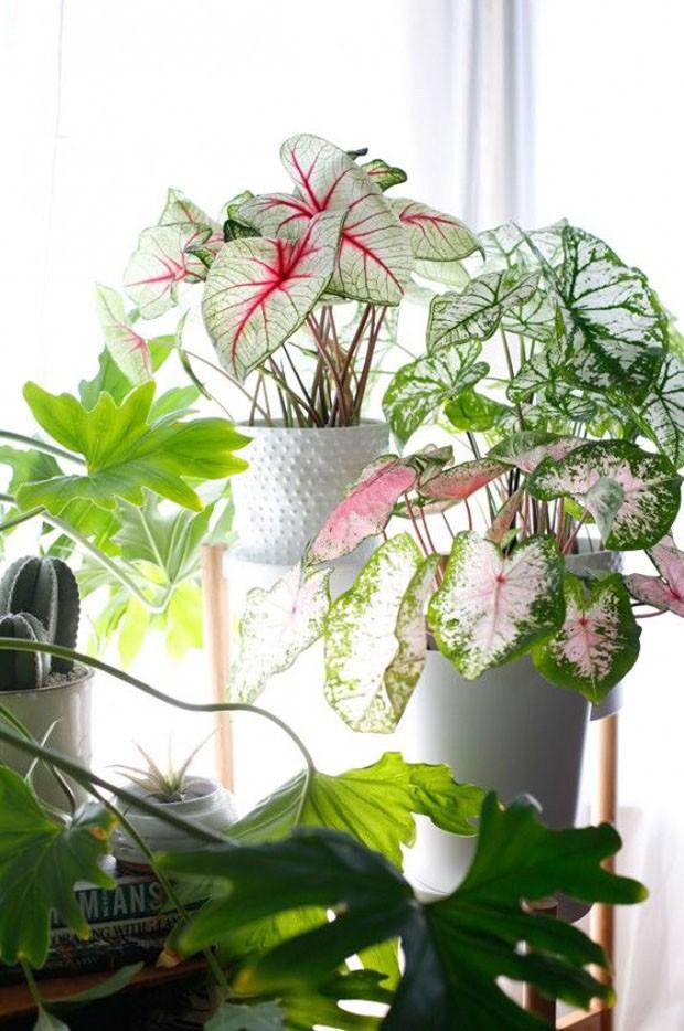 paisagismo-plantas-estampadas (Foto: Divulgação)