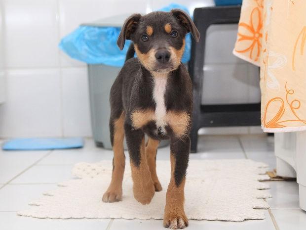 Após ser adotado, cão recebeu o nome de Whisky (Foto: João Carlos Frigério)