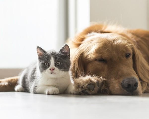 Cão ou gato? Pesquisa do Facebook tentou desvendar diferenças na personalidade de quem prefere um dos animais (Foto: Thinkstock)