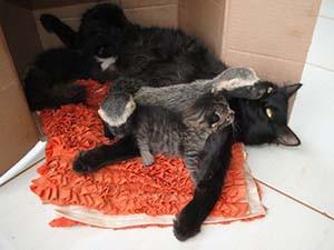 Gata adota filhotes de furão (Foto: Augusto Giovani/divulgação)