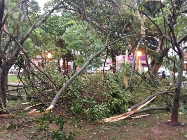Plantas despencaram no meio de via em Avaré (Foto: Adolfo Lima/TV TEM)