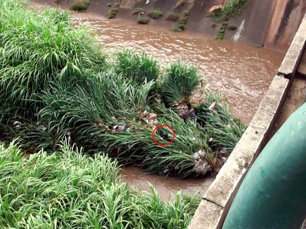 Animal ficou em cima de mato e lixo situados no local (Foto: Imagens/TV Bahia)
