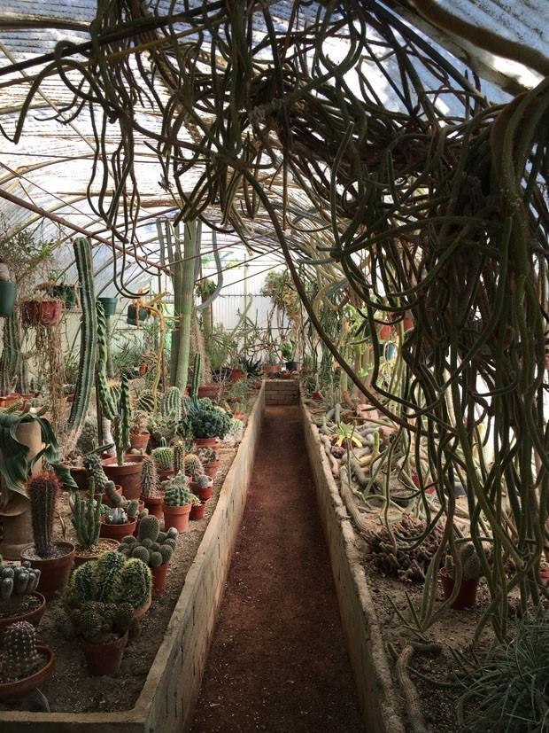 Moorten Botanical Garden: conheça o primeiro cactário do mundo (Foto: Flo Atelier Botânico)