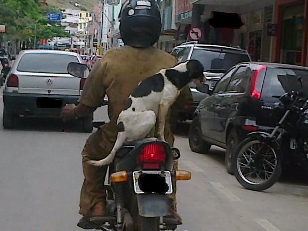Bolsa Para Carregar Cachorro Na Moto : G c?o ? transportado sem prote??o na garupa de moto no