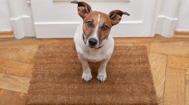 cachorro_pethub_pet (Foto: Shutterstock)
