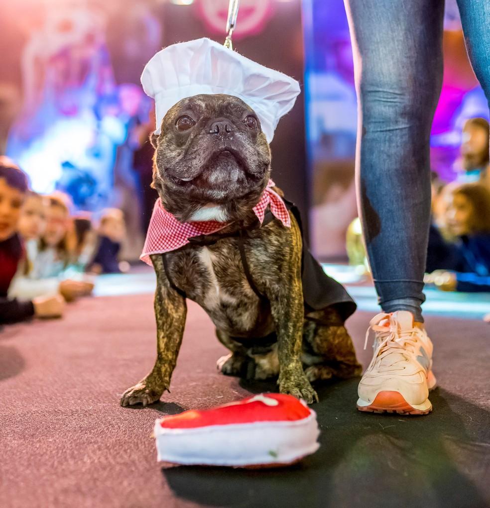 Desfile de cães teve quatro categorias (Foto: Bruno Gonzales/Divulgação)