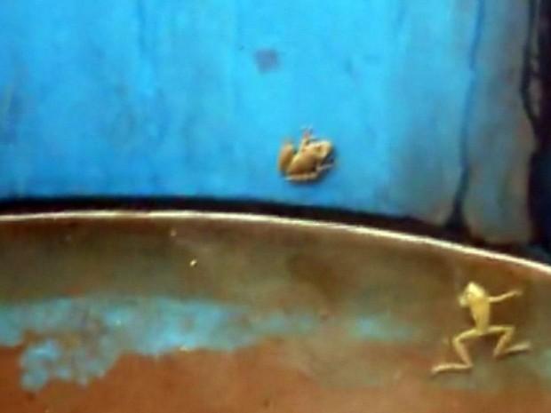 Sapos e girinos foram encontrados na caixa d´água (Foto: Reprodução/EPTV)