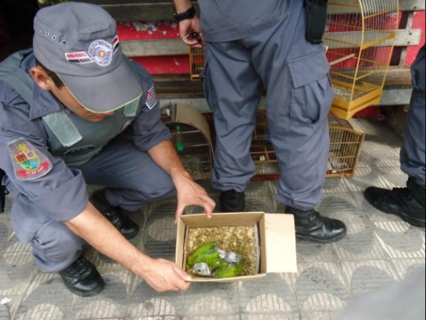 Pássaros apreendidos eram mantidos em péssimas condições em Cubatão  (Foto: Divulgação/ Polícia Militar Ambiental)