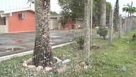 Mariposas invadem Teixeira de Freitas, no sul do estado