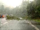 Árvore cai na pista e deixa trânsito lento na Serra das Araras, em Piraí