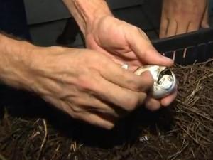 Nascimento Jacaré 1 (Foto: Reprodução/TV TEM)