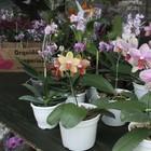 Exposição de orquídeas acontece em março (Divulgação / Prefeitura de Araruama)
