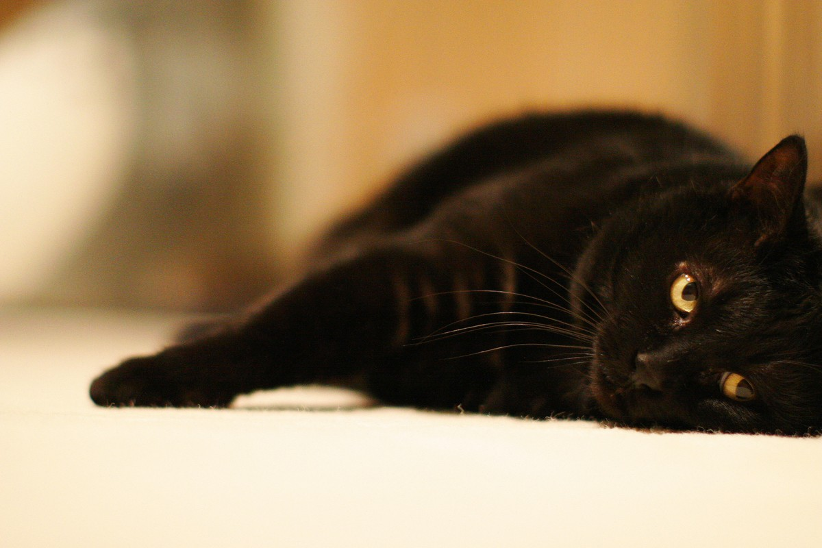 Gato preto (Foto: Flickr/ Bryan Allison/ Creative Commons)