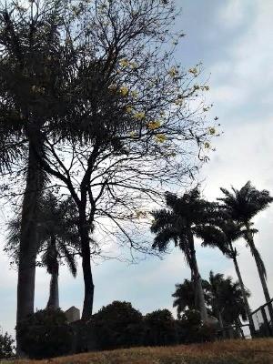 Previsão é de chuva nos próximos dias em MS (Foto: Diogo Nolasco / TV Morena)
