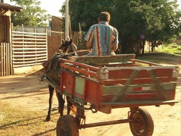 Regulamentação autoriza o transporte por tração animal (Foto: Reprodução/TV Tem)