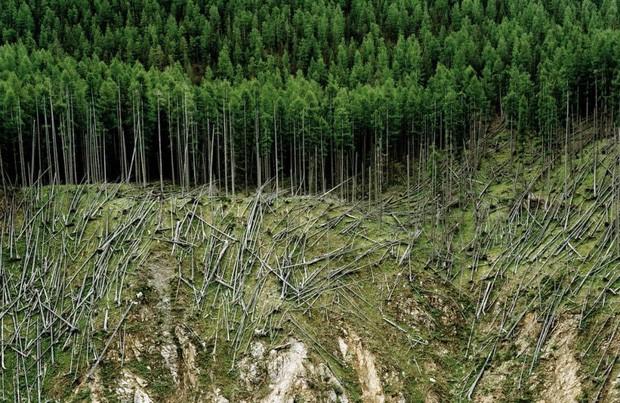 A foto de Olaf Unverzart é intitulada Rolled Lumber ('Madeira Laminada') e foi registrada em Ofenpass, na Suíça (Foto: Olaf Unverzart/Syngenta Photography Award)
