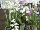 Feira de flores apresenta novidades de espécies em Cacoal, RO