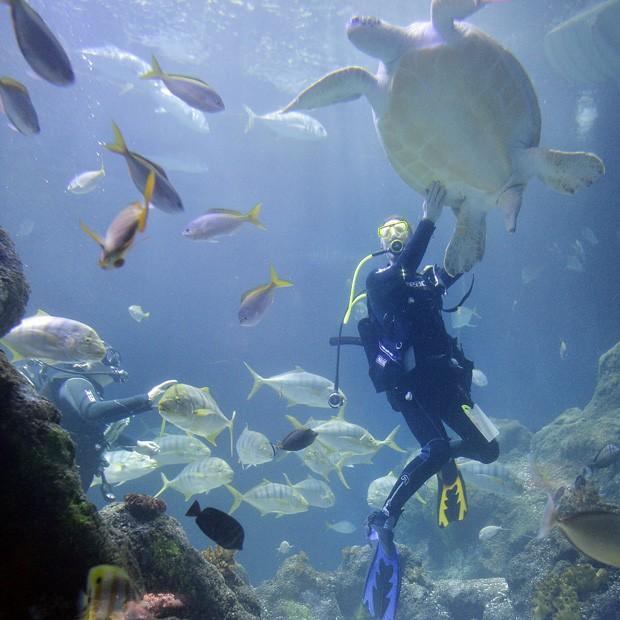Mergulhador analisa tartaruga marinha do aquário de Oberhausen (Foto: Martin Meissner/AP)