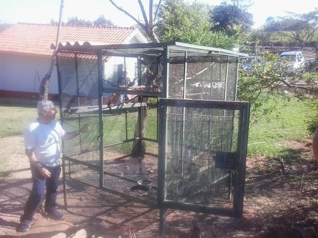 Depois de reabilitados, sabiás são devolvidos à natureza. (Foto: Giliardy Freitas / TV TEM)
