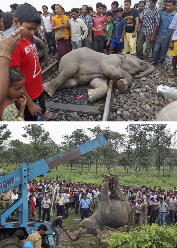 Filhote de elefante morto no acidente é observado enquanto é retirado dos trilhos (Foto: Reuters)