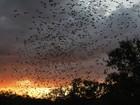 Fungo já matou quase 7 milhões de morcegos nos EUA e Canadá