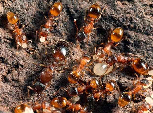 Resultado de imagem para formigas