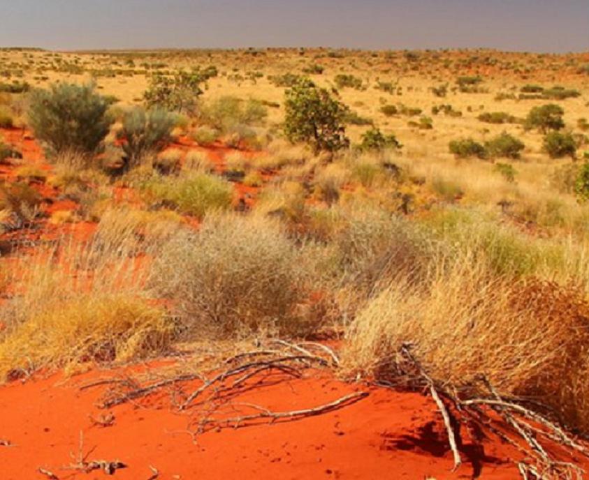 Arbusto encontrado na Austrália (Foto: Divulgação)