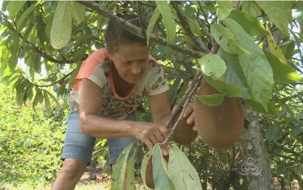A ilha é um grande produtor de polpas de frutas para todo o estado (Foto: Bom Dia Amazônia)