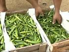Agricultores de Guiricema, MG, comemoram o preço do quiabo