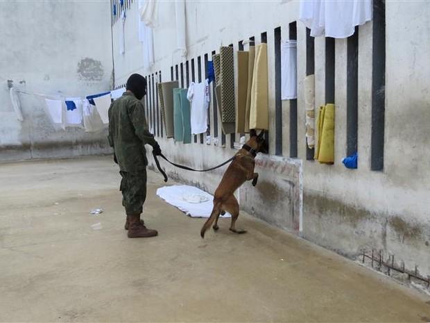Marinha faz varredura na Cadeia Pública de Natal (Foto: Divulgação/Marinha do Brasil)