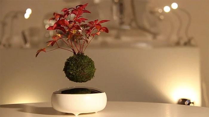 Artistas criam árvores flutuantes em miniatura