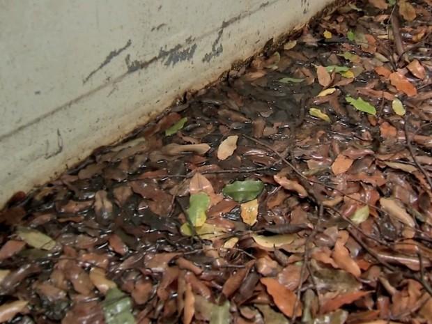 Água parada com folhas secas na carroceria de veículo (Foto: Reprodução/TVCA)