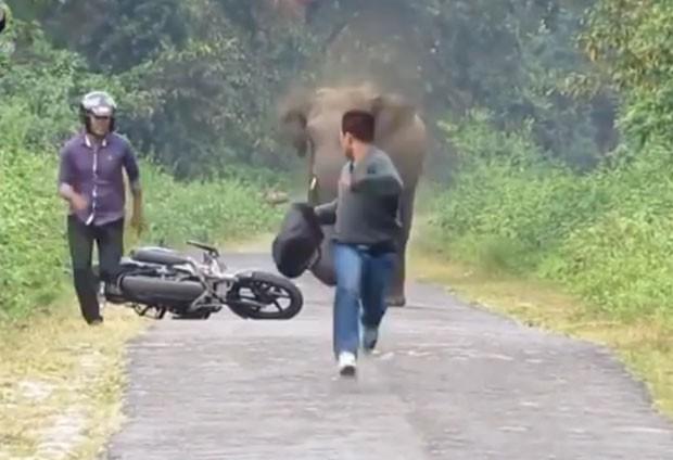 Motociclista e passageiro abandonaram moto após se depararem com elefante irritado (Foto: Reprodução/YouTube/Hot Videos)