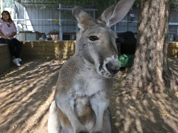Animal agora vive em um parque zoológico nos Estados Unidos (Foto: Sue Ogrocki/AP)