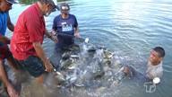 Maior parte do peixe produzido em Santarém vem de tanques do Eixo Forte
