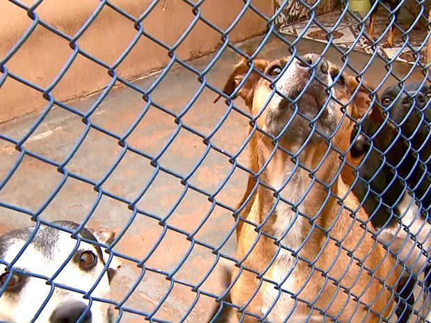 Denúncias contra maus-tratos a animais sobe 23% em Araraquara (Foto: Reprodução EPTV)