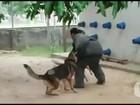 No Piauí, cães policiais ajudam no combate ao tráfico de drogas