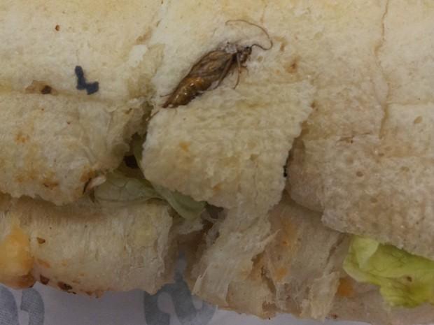 Sanduíche com barata encontrada assada no pão (Foto: Issac Newton Santos)