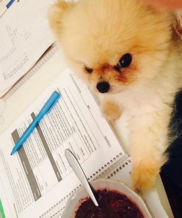 Zoe: a cachorra emburrada (Foto: reprodução/instagram)