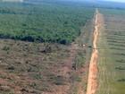 Mato Grosso ocupa há 8 anos posição de 2º maior devastador de florestas