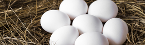 África deve alavancar exportações de ovos do Brasil
