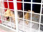 Homem é preso por maus-tratos a animais (Divulgação / PM)